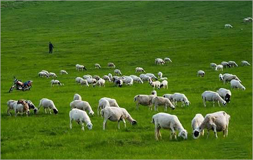 RFID技术在畜牧养殖业的发展趋势