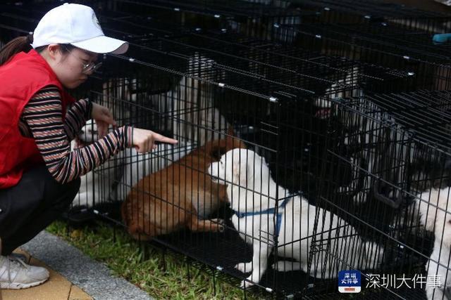 深圳拟规定所有犬只注射芯片,对超14天无人领养犬可实施安乐死