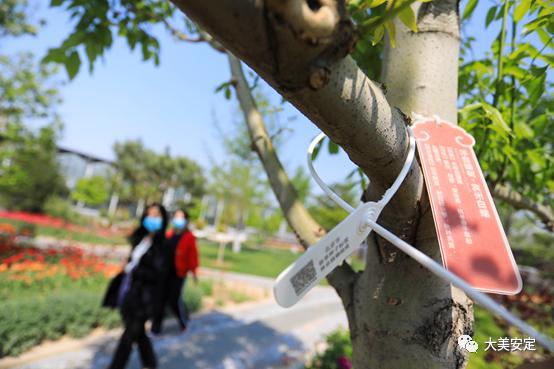 北京一苗企为苗木挂上电子标签,推进林木管理向数字信息化迈进