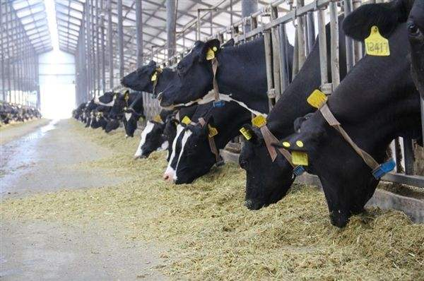 RFID技术促进了畜牧业的现代化养殖