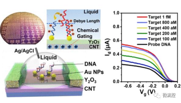 湘潭大学联合北京大学开发出高精度碳基生物传感器