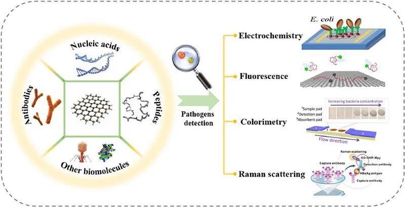 湖南高校聯合研發用于病原體監測的石墨烯生物傳感器