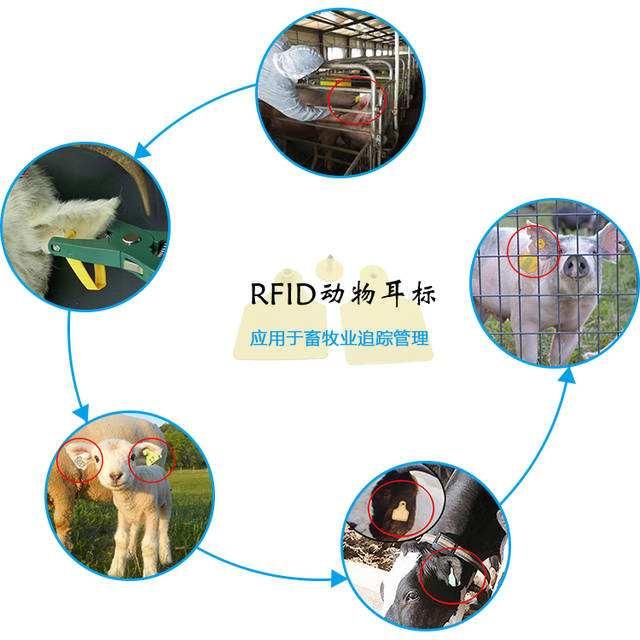 RFID畜牧管理提供了科學的管理模式
