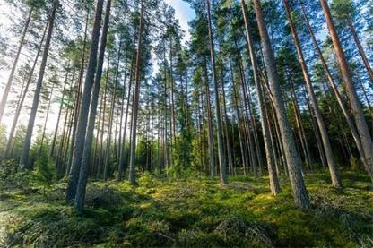 环保标杆! Forest Film™ 薄膜标签引领减塑风潮